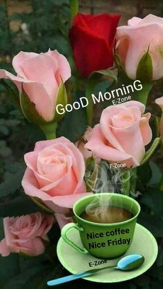 Good Morning Friday Images, Good Morning Messages, Decir No, Rose, Flowers, Plants, Thinking About You, Be Nice, Bom Dia
