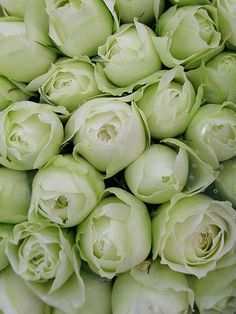 I had a hybrid tea in my garden years ago that had pale green buds. This is not the variety, but these are gorgeous.