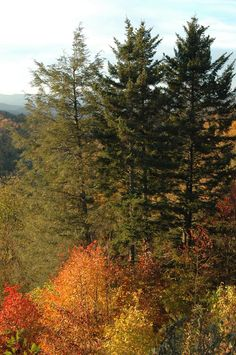 Nothing beats fall in the Smoky Mountains!