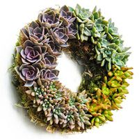 Succulent Centerpiece Wreath - from Breck's Gifts.  I got to see these in the greenhouses - they're gorgeous!