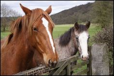 Horses Equines and people hold an ancient connection. Asian ramblers most probably domesticated the first horses some 4000 years ago…
