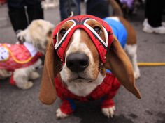 Superhero Bassett - not sure if Myrtle would enjoy this but I think it would be funny.
