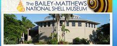 Shells on display at Sanibel Island Shell Museum
