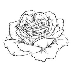 Image result for rose tattoo with  background