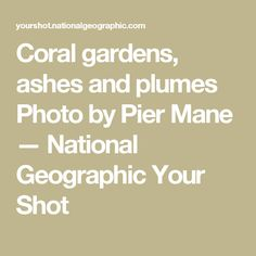 Coral gardens, ashes and plumes Photo by Pier Mane — National Geographic Your Shot