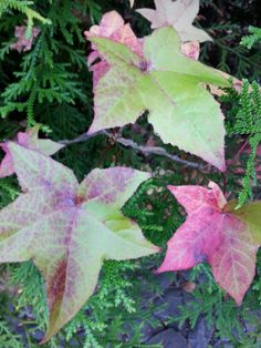 Folhas de outono.