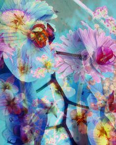 Orchida Multicolor VII - ALAYA GADEH