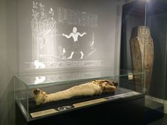 The Garstang Museum's Egyptian mummy. Courtesy Garstang Museum