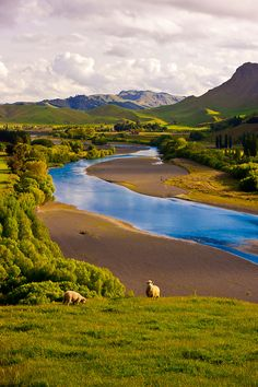 "Tukituki River, North Island, New Zealand. The Maori name Tukituki roughly translates ""to demolish"", presumably referring to the power of the river in flood. #sheep #nature #zen #hills #wonderland"