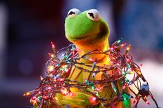 Kermit lights up the world! Kermit the Frog's photo. Kermit And Miss Piggy, Kermit The Frog, Kermit Face, Jim Henson, Sapo Kermit, Les Muppets, Sapo Meme, Merry Christmas Everybody, Muppets Most Wanted