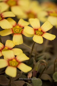 Nourish Your Soul Sorrel Plant, Wave Hill, Wood Sorrel, Garden On A Hill, Color Profile, Your Soul, Flower Pictures, Cacti And Succulents, Growing Plants