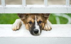 What You Need To Know About Animal Abuse And How To Report It | report animal abuse, animal cruelty, how to report animal abuse, signs of animal abuse, how to stop animal abuse, what is considered animal abuse, is animal abuse a crime