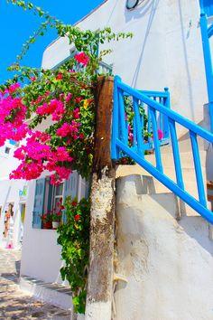 Bougainvillea in Mykonos, Greece