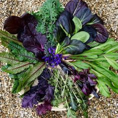 """1,257 Likes, 56 Comments - Growing an edible garden (@sam_and_wild_violet_garden) on Instagram: """"A little purple and red harvest from the garden today.  Clockwise from top; Red Russian kale, Red…"""""""