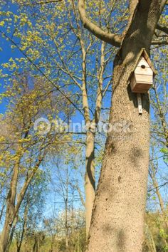 Stock Photo : Tree with birdhouse in springtime grove Big Tree, Photo Tree, Birdhouse, Spring Time, Pop Up, Houses, Stock Photos, Outdoor Decor, Image