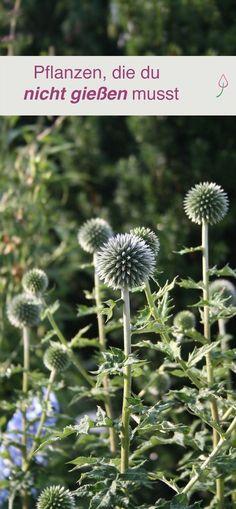 Pflanzen, die auf trockenem Boden wachsen