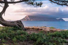Sardegna Uno Scorcio Dellisola Di Tavolara Osservata Da Cala Ginepro Foto Di Alberto Barroccu