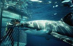 Private Shark Cage Diving Tour – Kabura Travel Tours
