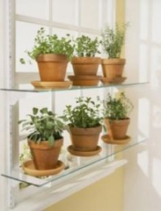1000 Images About Window Sill Garden On Pinterest