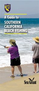 Most of these fish can be caught at ocean beach ocean for Surf fishing southern california