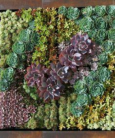 Paredes de suculentas como obras de arte - Succulent Avenue