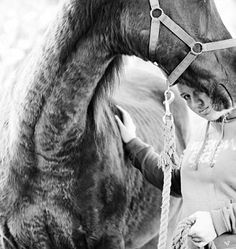 Poetry Archives - Passion For Horses Horse Poems, Poetry, Horses, Animals, Animales, Animaux, Animal, Poetry Books, Animais