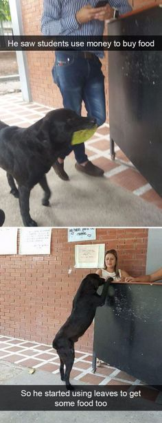 Dog breed – He saw students use money to buy food No haba paw So he started usin… Hunderasse – Er sah, wie Schüler Geld [. Funny Animal Memes, Cute Funny Animals, Funny Animal Pictures, Cute Baby Animals, Funny Cute, Funny Dogs, Animals And Pets, Funny Memes, Smart Animals