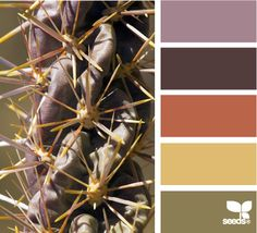 ✮ Cactus Hues - Great Fall Palette