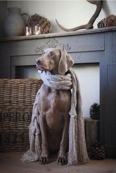 Decorating around your beautiful pup! Animals And Pets, Cute Animals, Tier Fotos, Beautiful Dogs, Mans Best Friend, Dog Life, Beagle, Animal Photography, Best Dogs