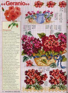 Gallery.ru / Фото #50 - Ботаника-цветы - irislena