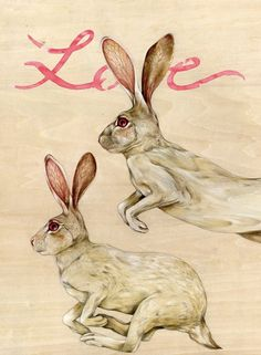 .Love Hares