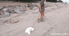 This cat who NEVER ASKED TO GO TO THE BEACH! | 13 Animals Who Are Having The Worst Day Ever
