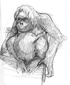 Dreaming of Borneo: a beautiful orangutan at the OKC Zoo.
