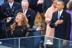 Détournements sur Reddit: la photo de ce chat a bien amusé les internautes