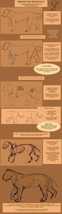 Improving Anatomy Tutorial by TamberElla on deviantART
