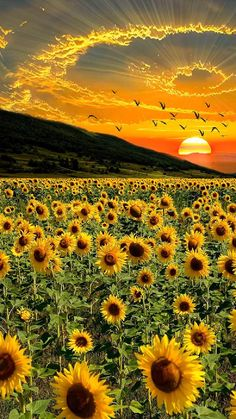 Beautiful Photos Of Nature, Nature Photos, Amazing Nature, Beautiful Flowers, Beautiful Love Pictures, Beautiful Live, Beautiful Scenery, Beautiful Landscape Wallpaper, Beautiful Landscapes