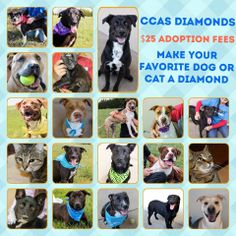 CODE RED! Please keep sharing our photos!   These babies are now Diamonds because of the generosity of some of our followers. This means their adoption fee is just $25 which covers their spay/neuter, micro-chip and vaccinations.   The shelter is completely full. Please come visit us. Maybe you'll find your next faithful companion.  Check out our dogs here: https://www.facebook.com/media/set/?set=a.111628235584763.20194.111625568918363&type=3