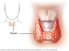 Hypothyroidism — Reference guide covers symptoms, causes, treatment of an underactive thyroid gland. #Symptomsandcausesofthyroidproblems #Symptomsofanunderactivethyroid