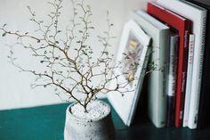 ズボラでも育てやすい植物ベスト5 No.4_ソフォラミクロフィラ・リトルベイビー