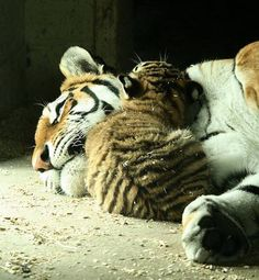 no words needed.....pure love !