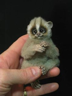 A slow loris - by Angelica