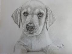 Labrador Retriever - Realistic Pencil Drawing