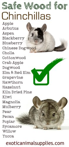 Safe wood for chinchilla toys, cages, shelves, and accessories. Chinchilla safe wood is the only kind of chews you should give your chin to avoid sickness.