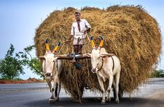 About India Photo by Melissa Freitas — National Geographic Your Shot