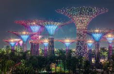 Singapore's Supertrees, Solar-Powered Vertical Gardens