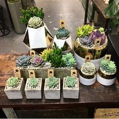 These guys are headed to tomorrow. Thanks to the westside for your continuous support. These guys are perfect holiday gifts! Recycled Gifts, Terraria, Holiday Gifts, Recycling, Table Decorations, Guys, Home Decor, Plants, Succulents