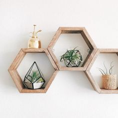 Adding to my wish list NOW! Hexagon shelves are from Forget it.lao and air plants and terrariums from Hexagon Shelves, Honeycomb Shelves, Decoration Entree, Wood Painting Art, Modern Wall Decor, My New Room, Wall Shelves, Plant Shelves, Air Plants