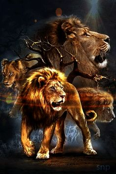 Красавцы львы! - анимация на телефон №1270898