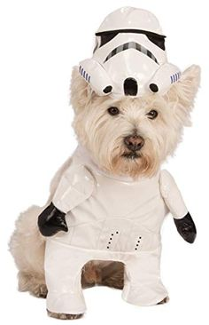 13 Best Halloween costumes for dogs images