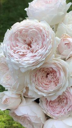 Beautiful Flowers Garden, Blush Roses, Fresh Flowers, Wedding Flowers, Pastel, House Design, Pretty, Plants, Flowers